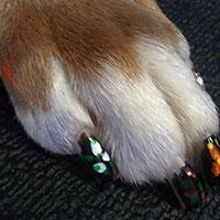 Dog Nail Painting